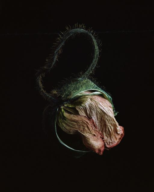 , 'Flowers XXIX,' 2010, CHRISTOPHE GUYE GALERIE