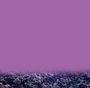 , 'Pantone: Violeta celaje - Pantone: cloudscape violet,' 2017, Artflow Galeria