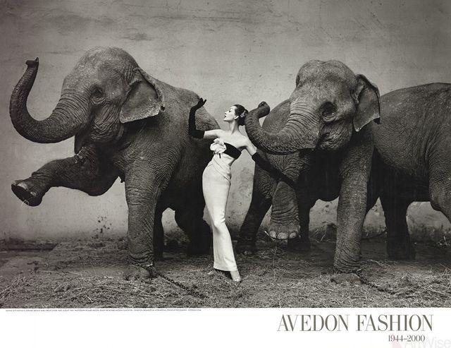 , 'Dovima with Elephants,' 2009, ArtWise