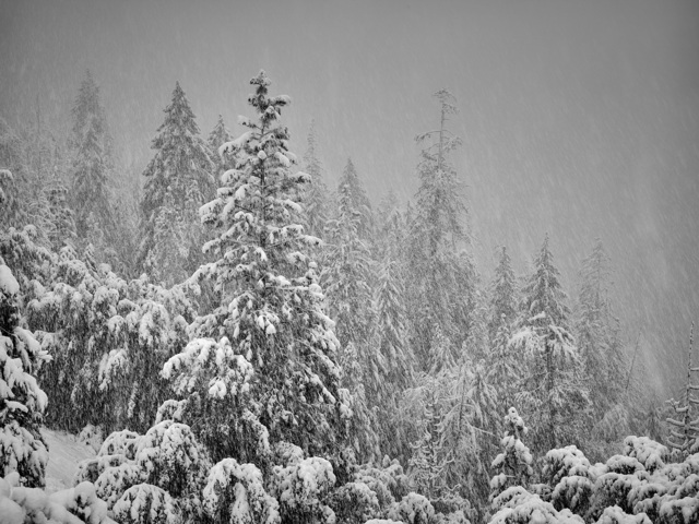 , 'Snow Storm, Yosemite, CA,' 2016, Fabrik Gallery