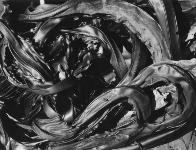 , 'Kelp, Point Lobos,' 1966, Photography West Gallery