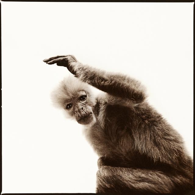 Nine Francois, 'Monkey III', Weston Gallery