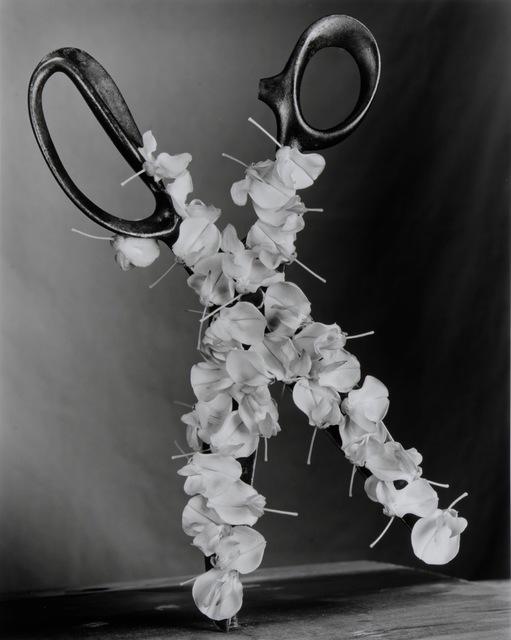, 'Wisteria Scissors,' 2015, Foto Relevance