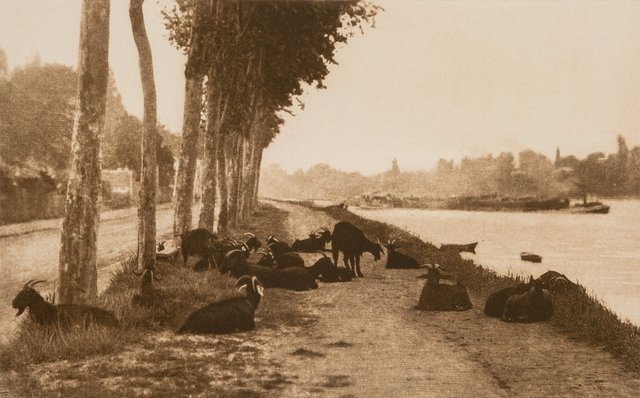 Alfred Stieglitz, 'Pastoral Landscape with Goats (On the Seine, Near Paris)', 1897, Photography, Photogravure, Heritage Auctions