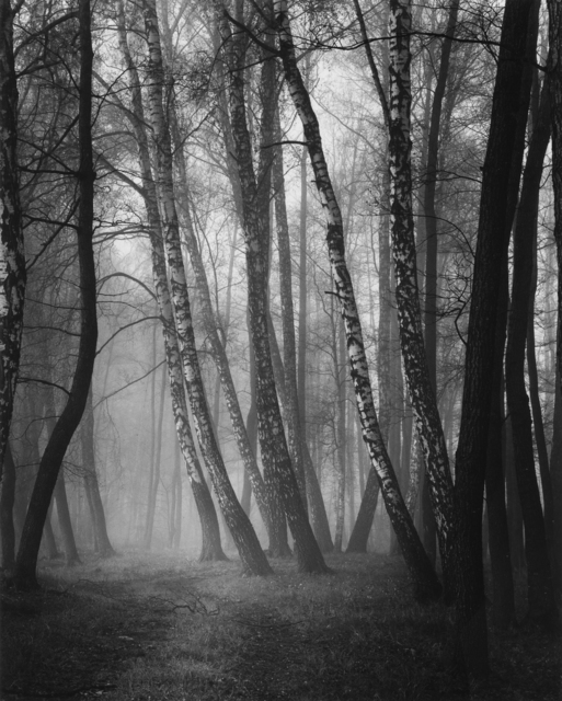 , 'Walking In The Fog,' 2016, Photography West Gallery