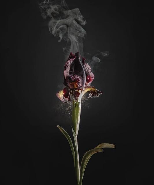 , 'Iris atropurpurea D03,' 2018, Talley Dunn Gallery