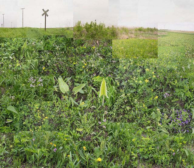 , 'A Small Central Illinois Prairie, May 15,' 2018, Catherine Edelman Gallery