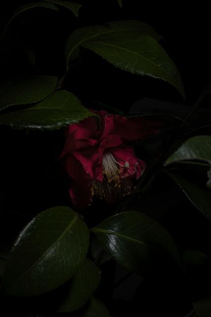 , 'Plantarium, Study 14,' 2019, ILEX Gallery