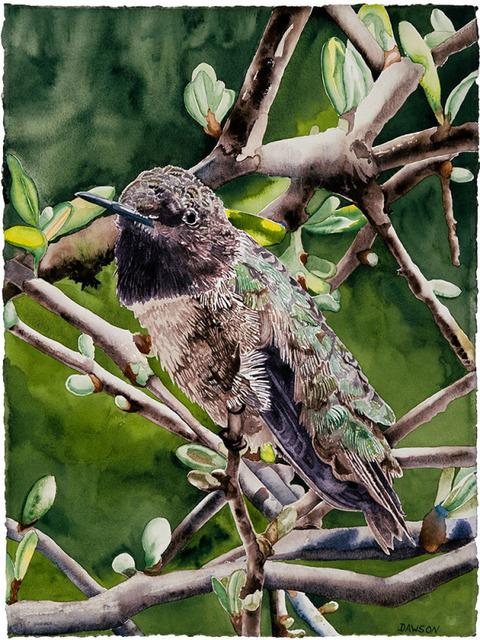 , 'Male Black-throat Hummingbird,' 2018, Wally Workman Gallery
