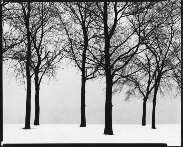 , 'Chicago (trees),' 1950, Etherton Gallery