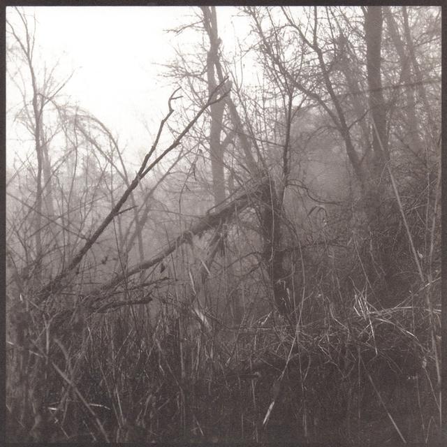 Denise Oehl, 'Into the Woods', 2018, John Davis Gallery