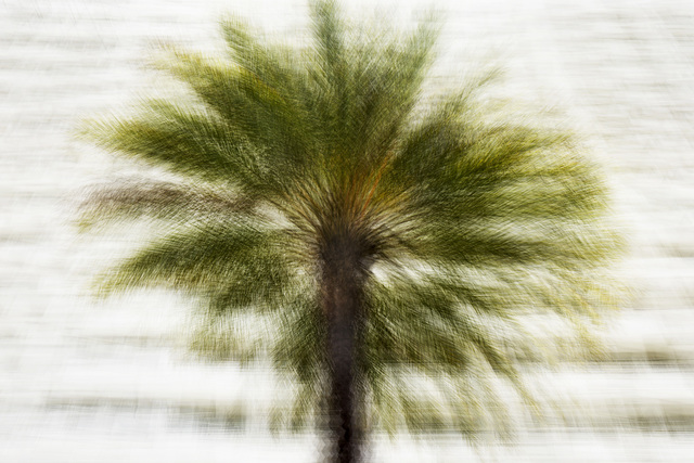 , 'Santa Monica #2,' 2017, In The Gallery
