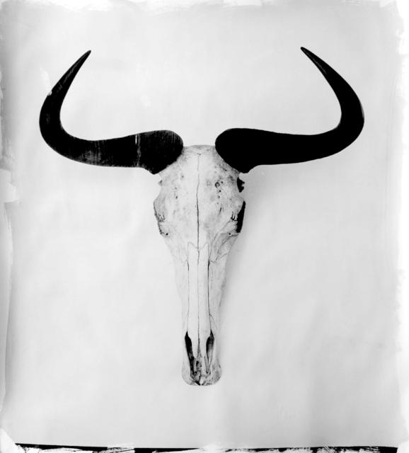 , 'Horns III,' 2004, HackelBury Fine Art