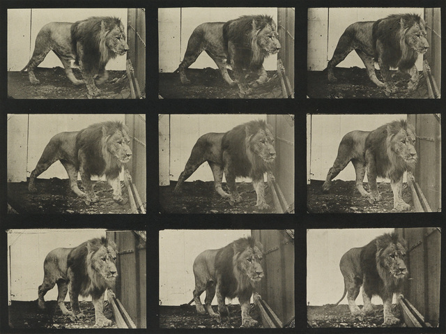 Eadweard Muybridge, 'A selection of 10 plates from Animal Locomotion depicting animals', 1887, Swann Auction Galleries