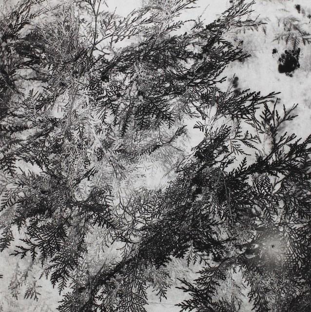 , 'Pine,' 2014, MATÈRIA