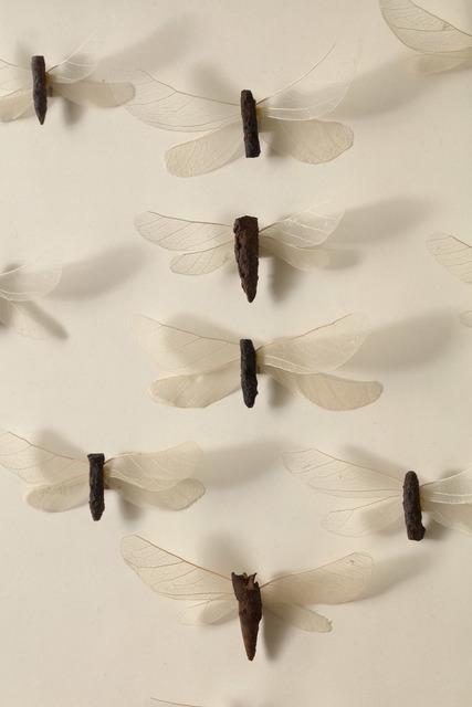 , 'May's Flies,' 2017, DSC Gallery