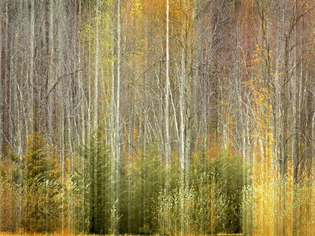 , 'Landscape I,' 2016, Carter Burden Gallery