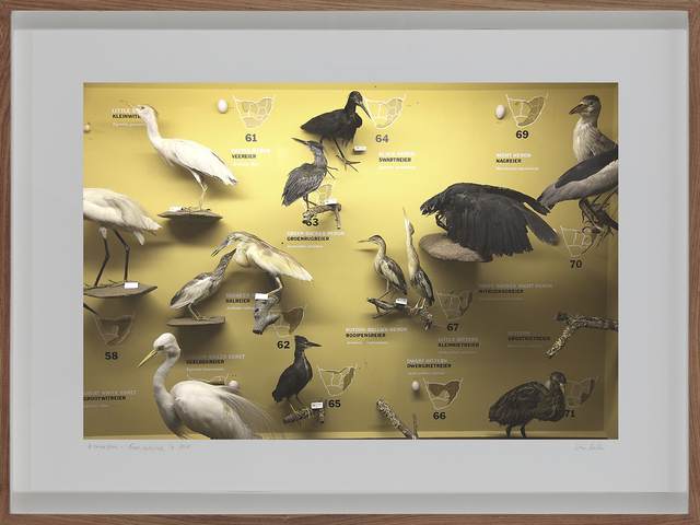 , 'Transvaal Museum of Natural History, Pretoria, South Africa,' 2011, Barnard Gallery