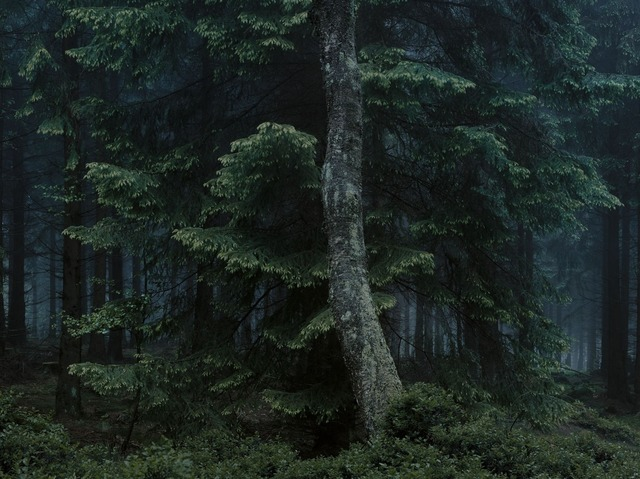 , 'WALD | Landscapes of Memory #6678,' 2010, photo-eye Gallery