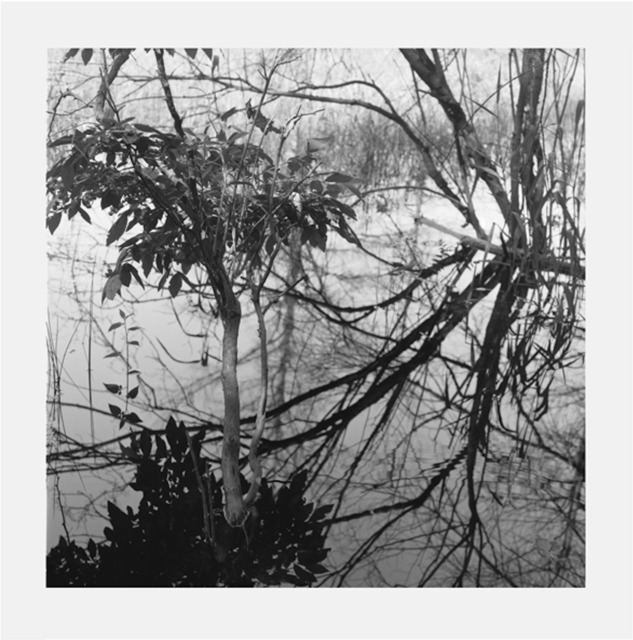 Jennifer Marshall, 'Reflections I', 2008, Jungle Press
