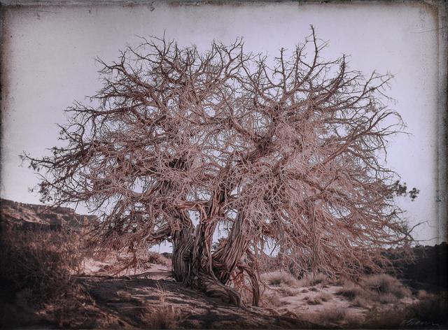 , 'Juniper Tree, Monument Valley, Utah   ,' , Etherton Gallery