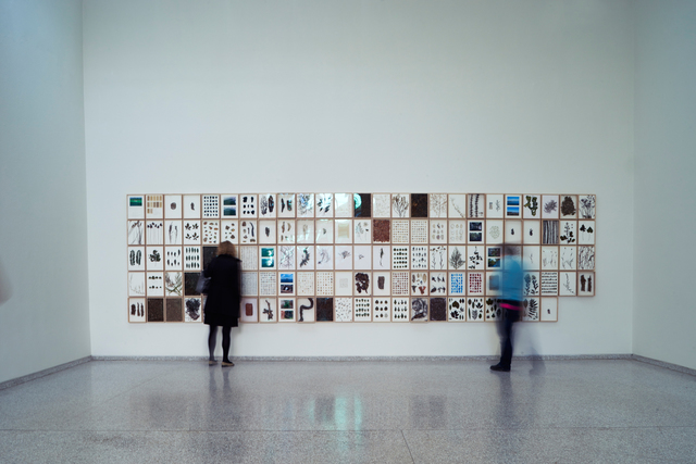 herman de vries, 'from the language of venice - a journal (Installation view)', 2015, 56th Venice Biennale