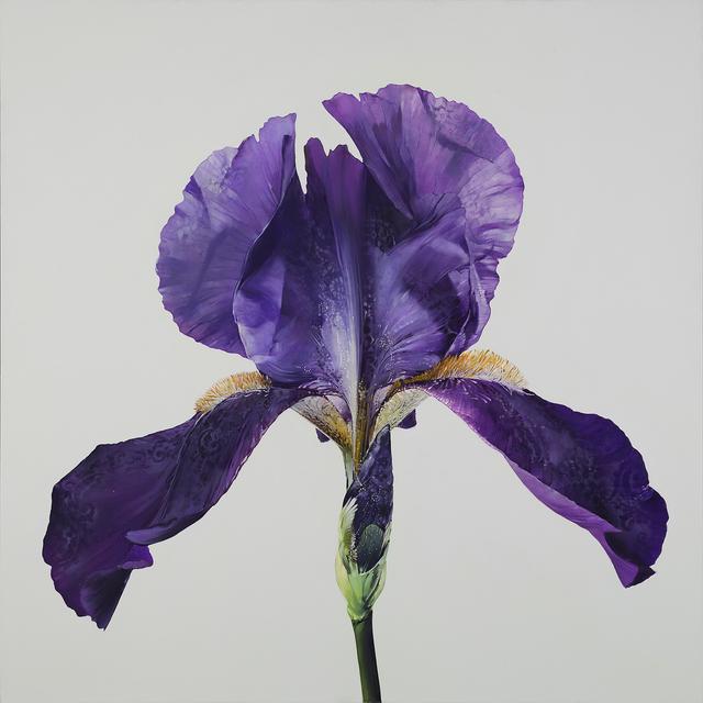 Carmelo Blandino, 'Intuition Iris', 2014, Print, Fine Art Giclee Print on Paper, Specimen Mounted Display, METHOD & CONCEPT