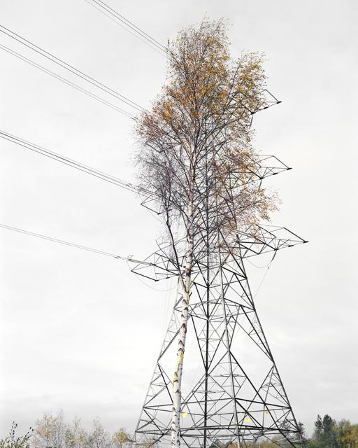 , 'Birch & Steel, Brokenhurst,' 2008, Open Doors Gallery
