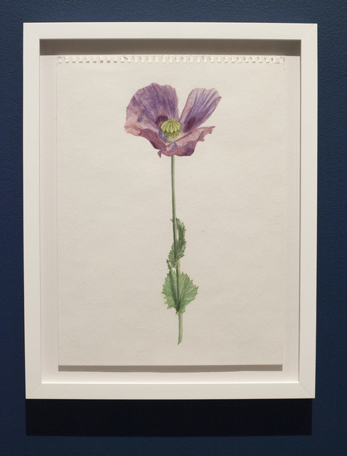 , 'Hungarian Blue Breadseed Poppy,' 2018, Ever Gold [Projects]