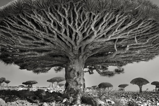 , 'Heart Of The Dragon, Socotra, Yemen.,' 2010, Roland Belgrave Vintage Photography Ltd