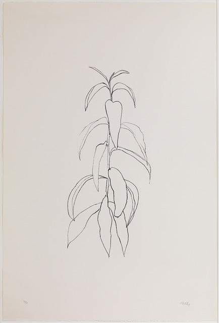 , 'Peach Branch,' 1973-1904, Susan Sheehan Gallery