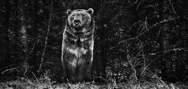 David Yarrow, 'The Boss', ca. 2015, Isabella Garrucho Fine Art