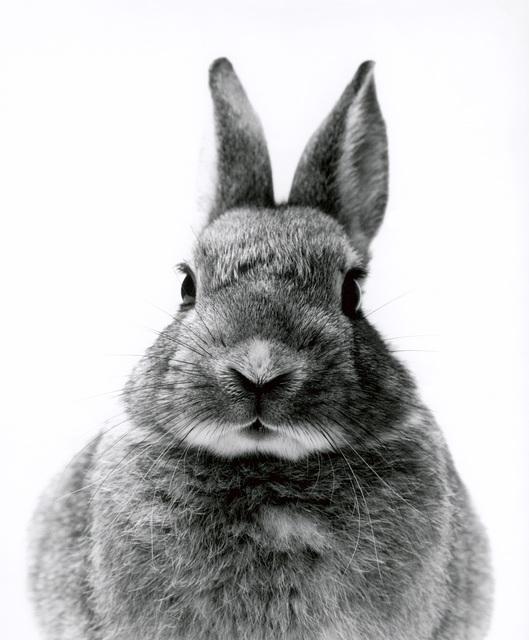 , 'Rabbit,' 2000, Galerie Peter Sillem