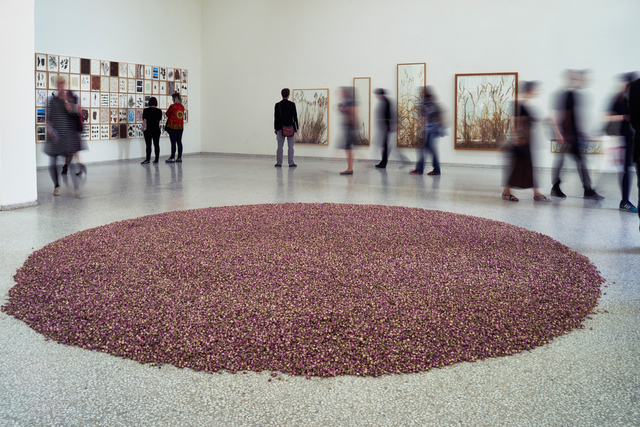 , '108 pound rosa damascena (Installation view),' 2015, 56th Venice Biennale