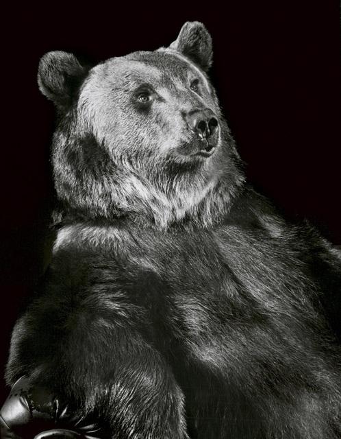 , 'Brown Bear,' 1999, Galerie Peter Sillem