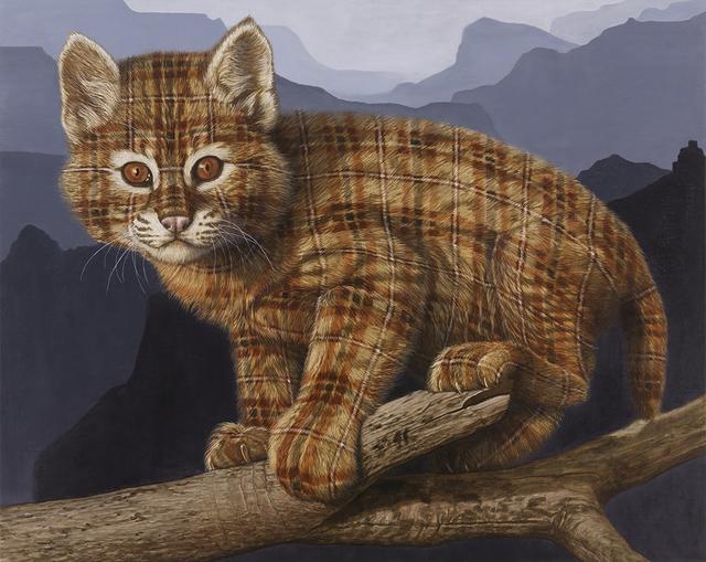 , 'Bobcat Kitten (Grand Canyon, AZ),' 2015, Rodolphe Janssen