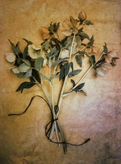 , 'Lenten Roses,' 2018, Panopticon Gallery