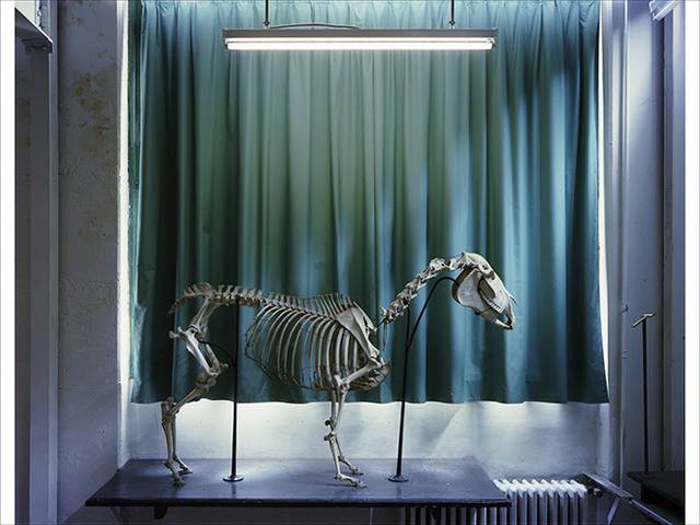 Richard Barnes, 'Left Panel, Horse, Musee Fragonard', 2005, Bau-Xi Gallery
