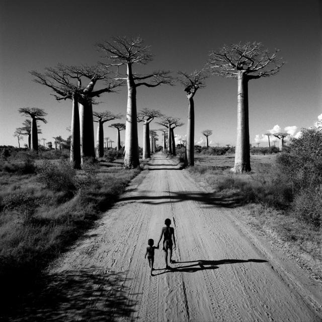, 'Allée des Baobabs, Madagascar,' 1997, Atlas Gallery