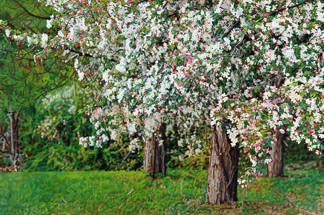 , 'Thicket No. 39: Crabapples,' 2014, Duane Reed Gallery
