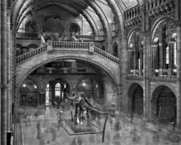, 'Diplodocus, Natural History Museum, London,' 2007, Aperture Foundation