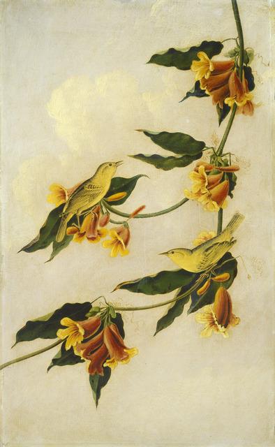 Joseph Bartholomew Kidd after John James Audubon, 'Yellow Warbler', 1830-1833, Painting, Pencil and oil on millboard, National Gallery of Art, Washington, D.C.
