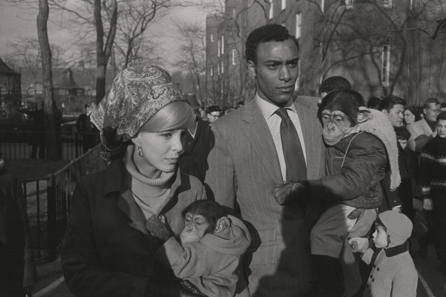, 'Central Park Zoo, New York,' 1967, Lee Gallery
