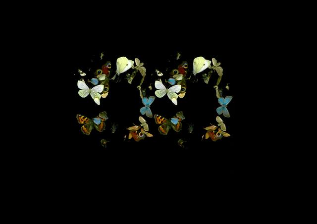Dan Wolgers, 'De Profundis V (fjärilar)', 2013, Galleri Magnus Karlsson