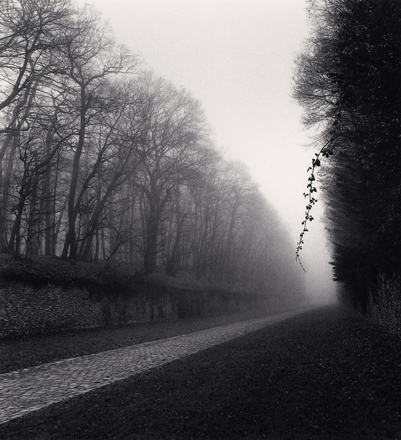 , 'Suspended Vine, Marly, France,' 1995, G. Gibson Gallery
