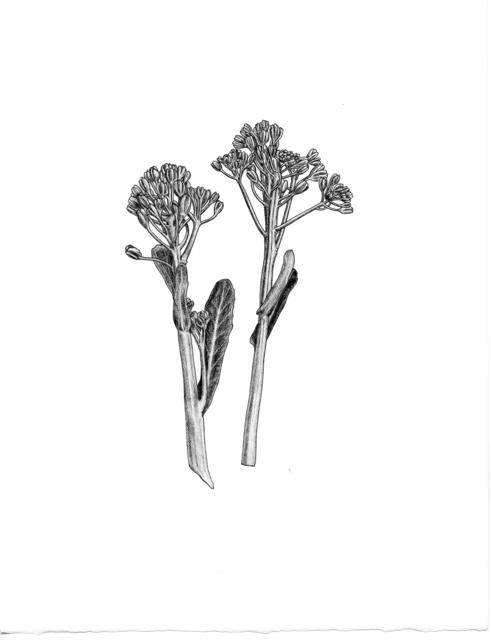 , 'Broccoli di Cicio,' 2012, Paulson Fontaine Press