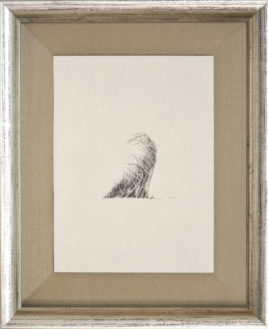 , 'Transforming trees,' 2012, Kamiya Art