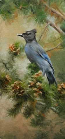 , 'Stellar Jay,' , Sorrel Sky Gallery
