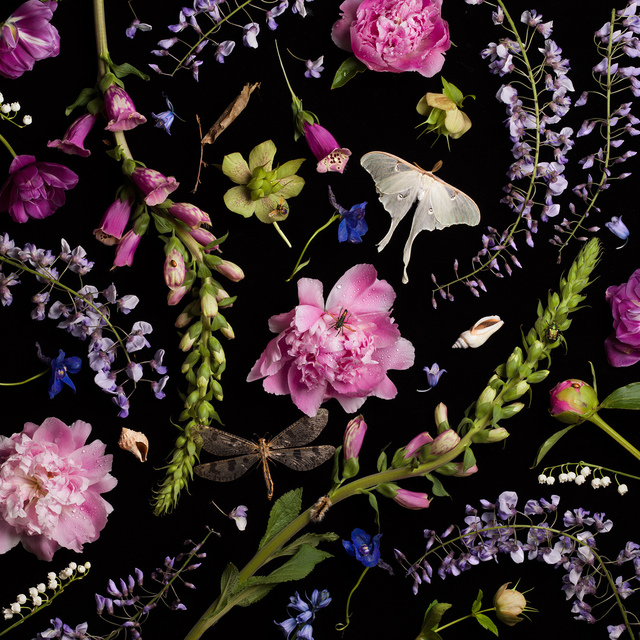 , 'Botanical V (Peonies and Wisteria),' 2013, Robert Mann Gallery
