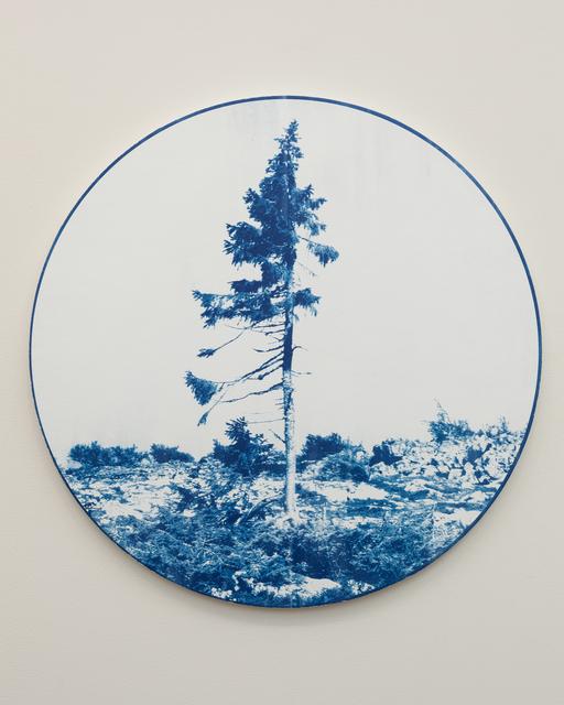 , 'Old Tjikko (Norway Spruce) 9,950 yrs.,' 2018, Goodwin Fine Art